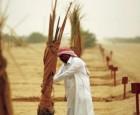 مستثمر كويتي يزرع 100 ألف نخلة وبناء محمية طبيعية في البصرة