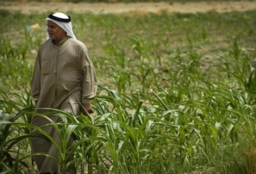 التجارة: السعودية ستستثمر مليون هكتار في الانبار