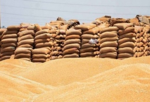 فلاحو الاقليم يبدأون بتسويق الحنطة الى مخازن التجارة