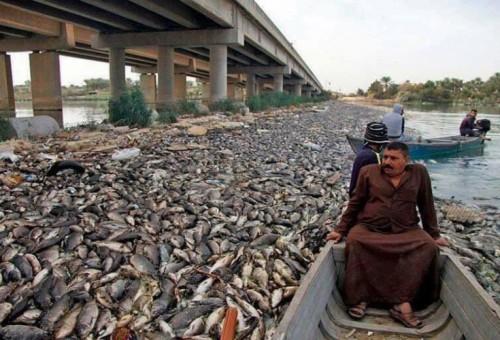 مصدر محلي يرجح تسميم مياه الفرات.. وينبه: التلوث الشديد لم يقتل أسماك شط العرب