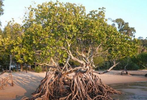 تنفيذ مشروع في البصرة لتشجير سواحل الفاو بأشجار مقاومة للملوحة والحرارة